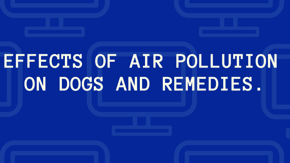 Effects of Air Pollution on Dogs and remedies.